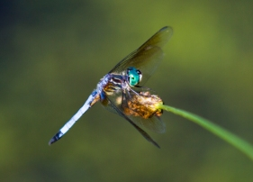 dragonfly_71a6832