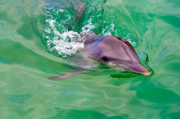 weepwa-dolphin