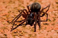 weepwa-spider